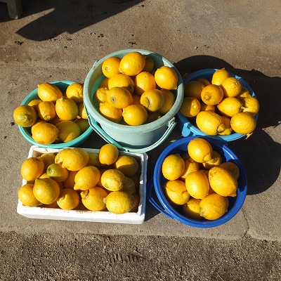lemon2017-2.jpg